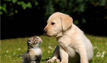 Pet Services - Matraville Vet