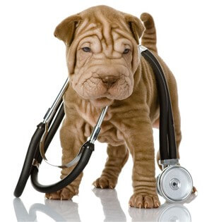 Vet service for Puppies
